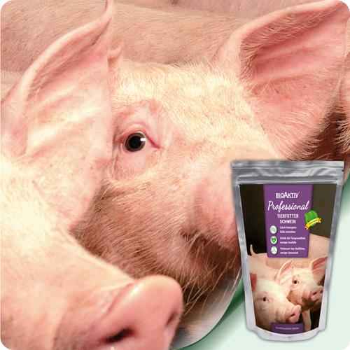 за свине
