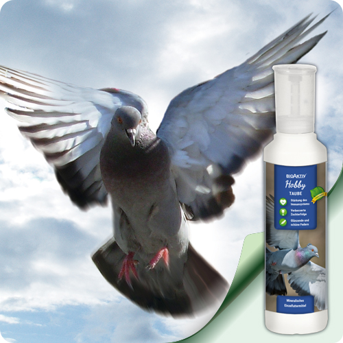 добавка за гълъби