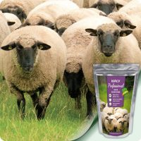 за овце и кози